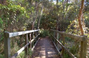 Awaba Bay Foreshore Walk - Mackay Tourism