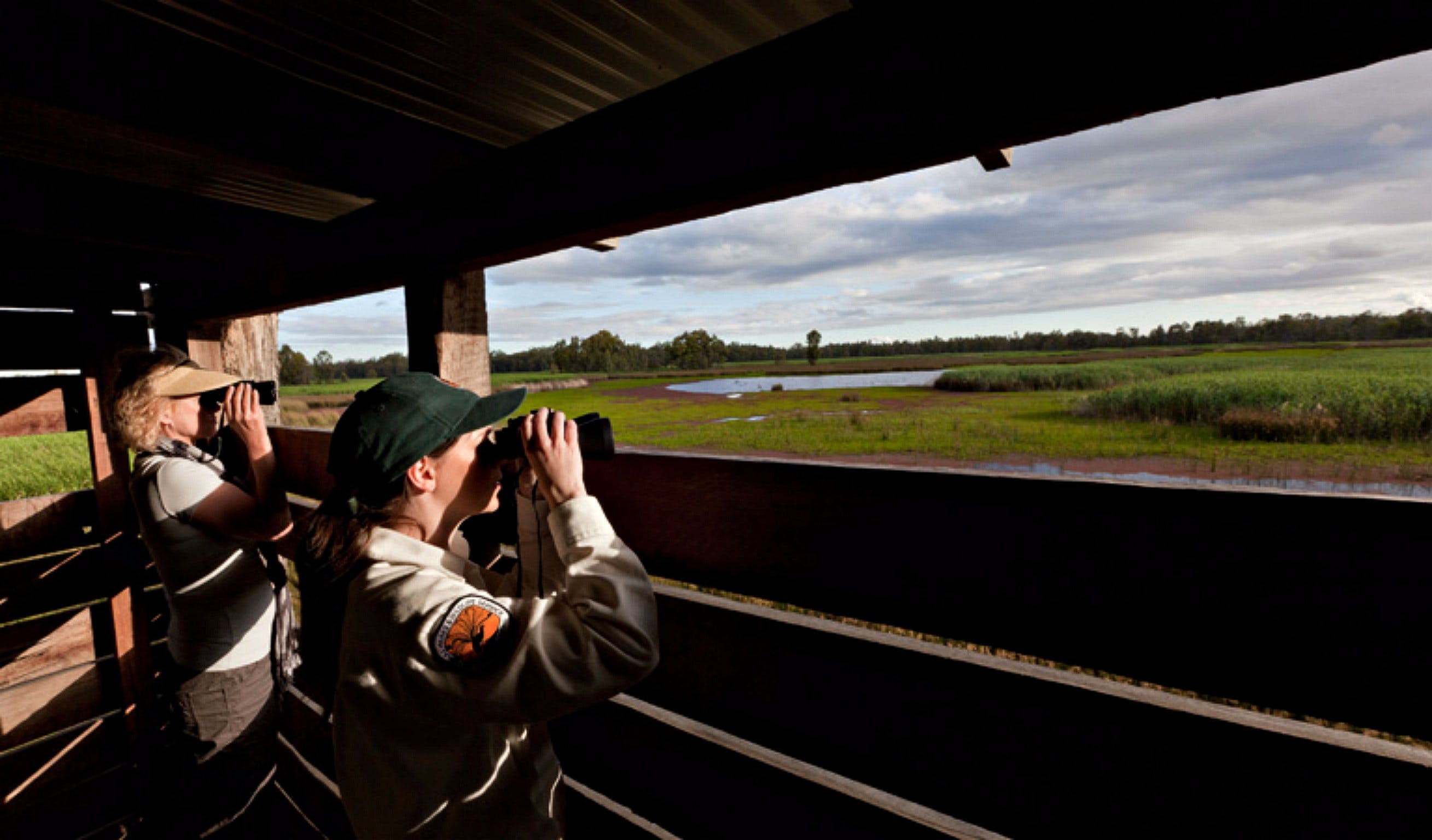 Reed Beds Bird Hide Boardwalk - Mackay Tourism