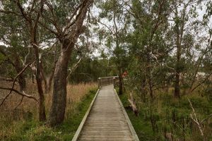The Briars Park Walking Trails - Mackay Tourism