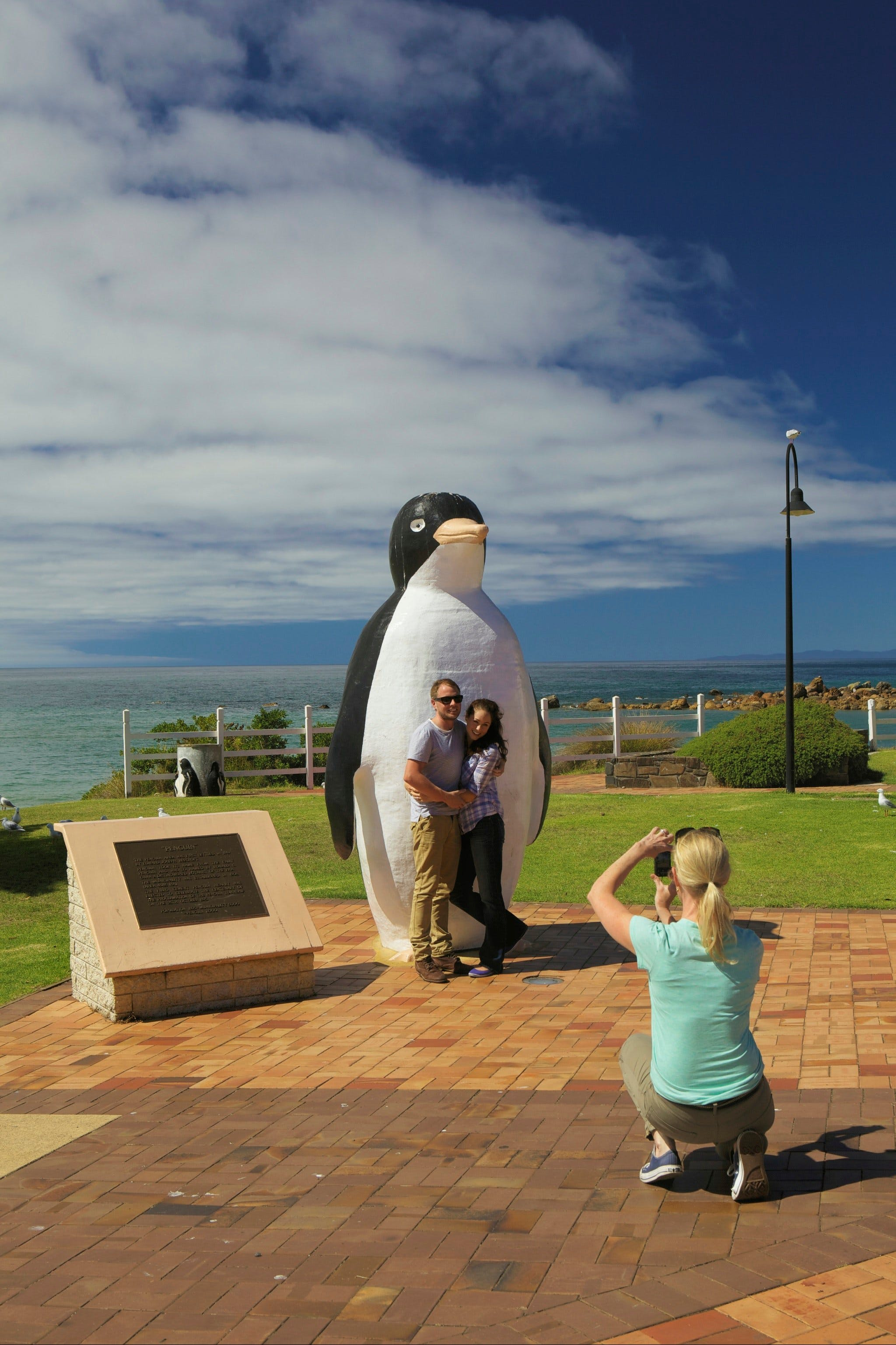 Penguin - Mackay Tourism
