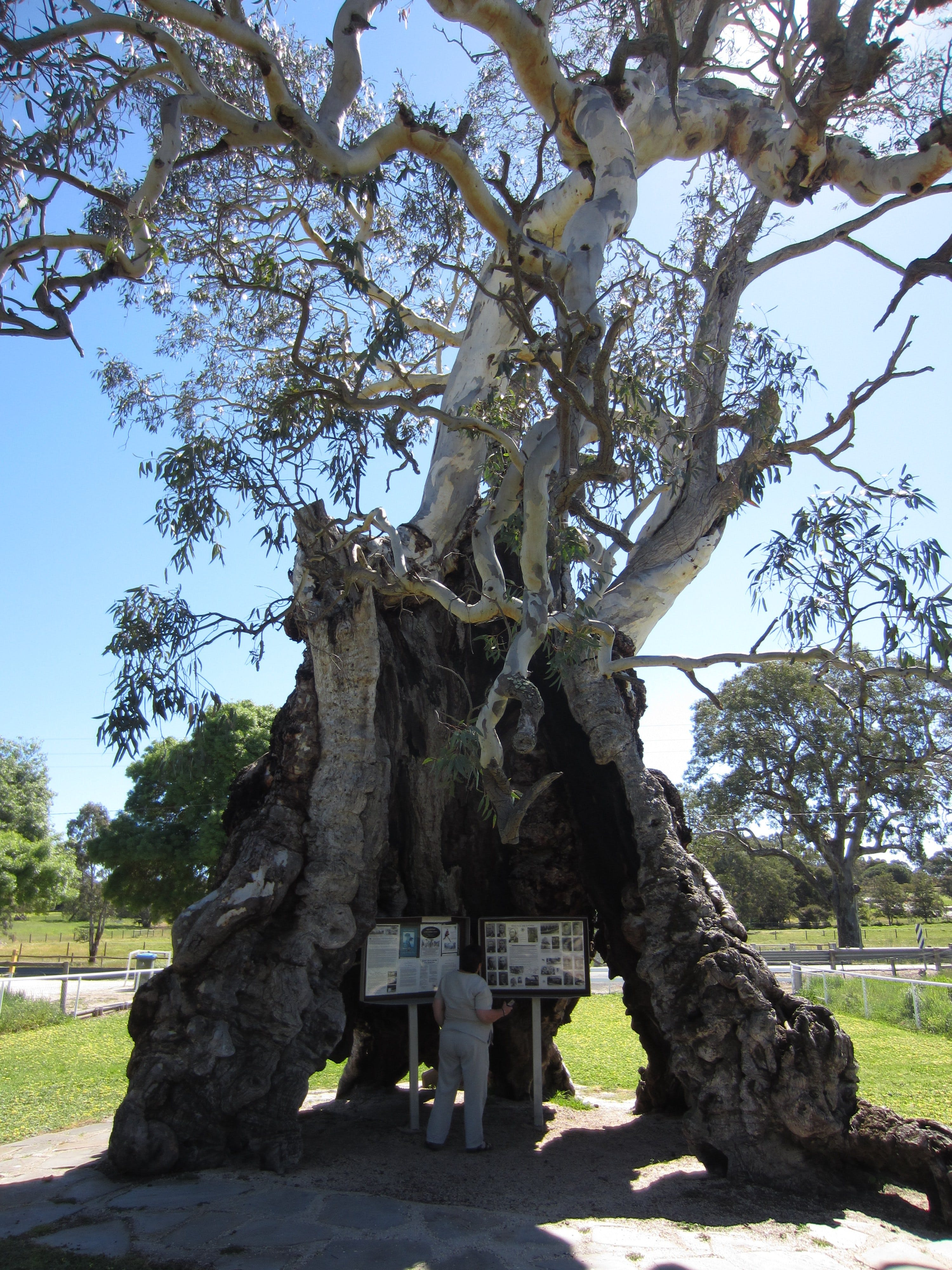 The Herbig Family Tree - Mackay Tourism