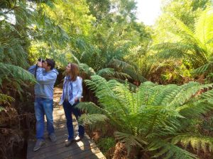 Endeavour Fern Gully Walks - Mackay Tourism