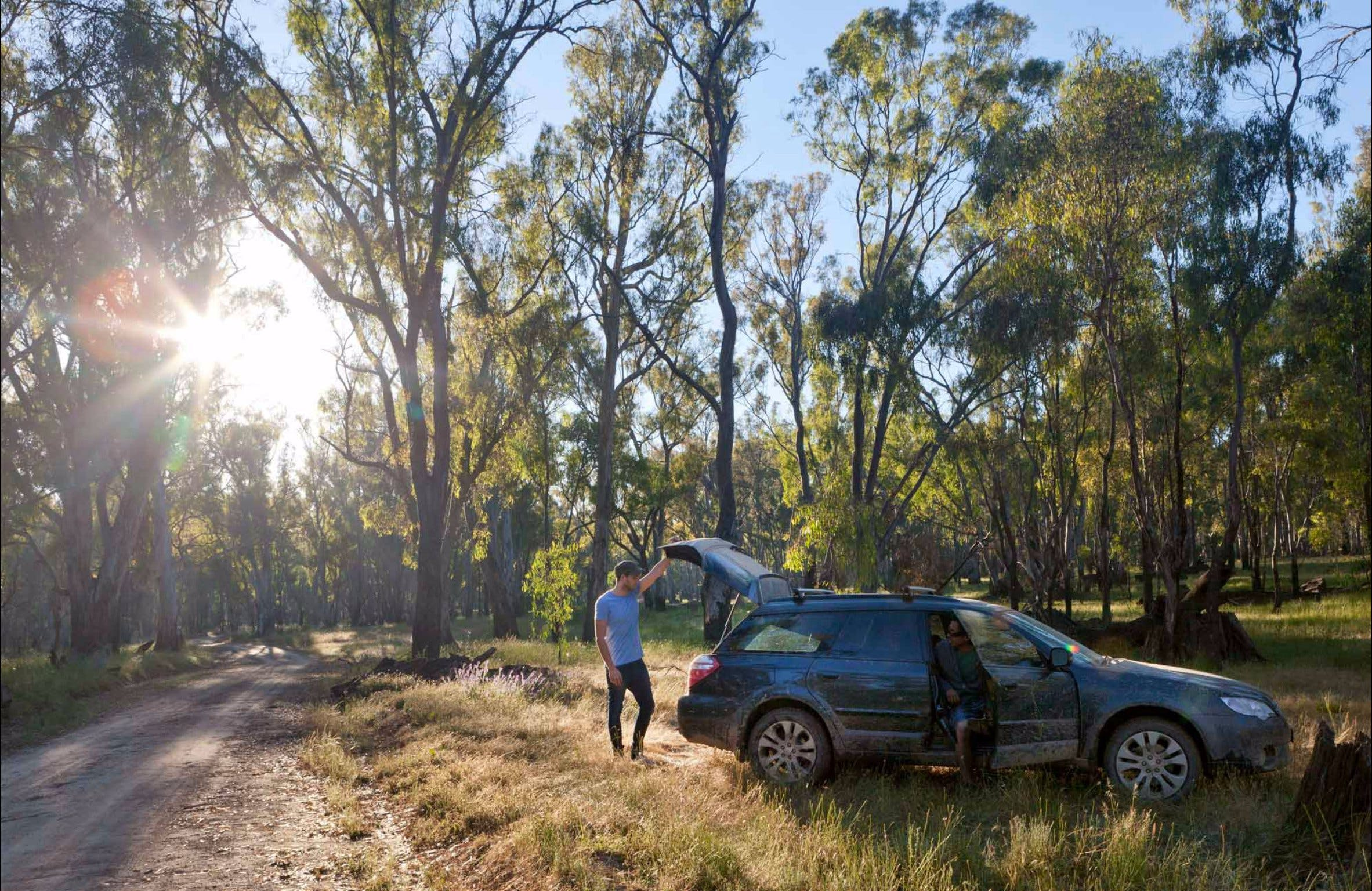 Forest Drive Murrumbidgee Valley National Park - Mackay Tourism
