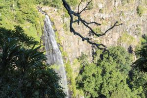 Morans Falls track Lamington National Park - Mackay Tourism