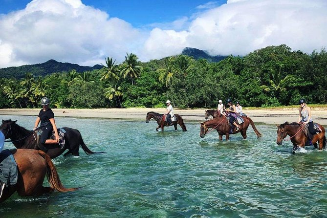 Afternoon Beach Horse Ride in Cape Tribulation - Mackay Tourism