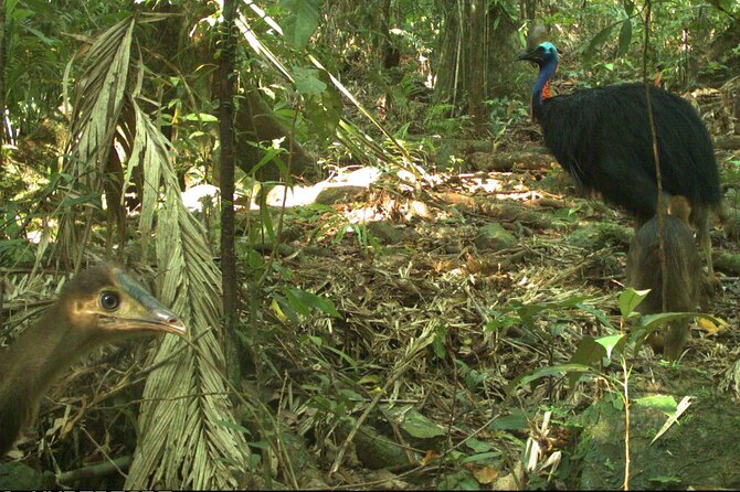 Small-Group Trekking Experience in Daintree National Park - Mackay Tourism