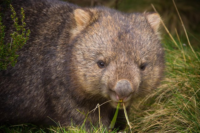 Cradle Mountain Wildlife Spotting after Dark - Mackay Tourism