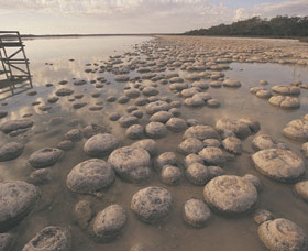 Lake Clifton Thrombolites - Mackay Tourism
