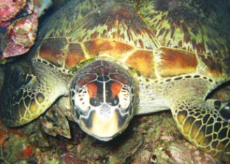 Adrenalin Snorkel and Dive - Mackay Tourism