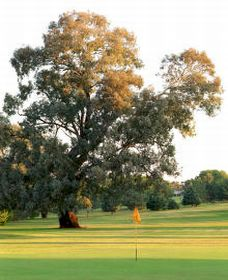 Cowra Golf Club - Mackay Tourism
