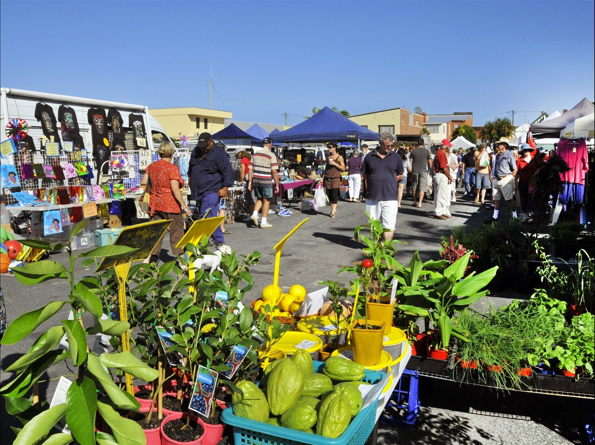 Maclean Community Monthly Markets - Mackay Tourism
